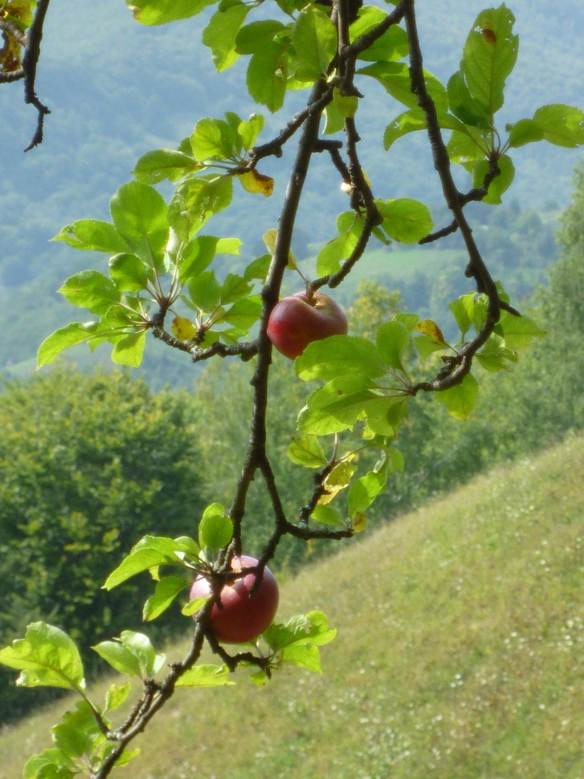 Roumanie randonnée découverte