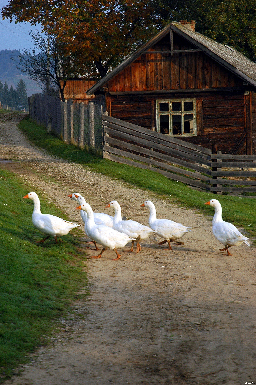 Roumanie séjour randonnée