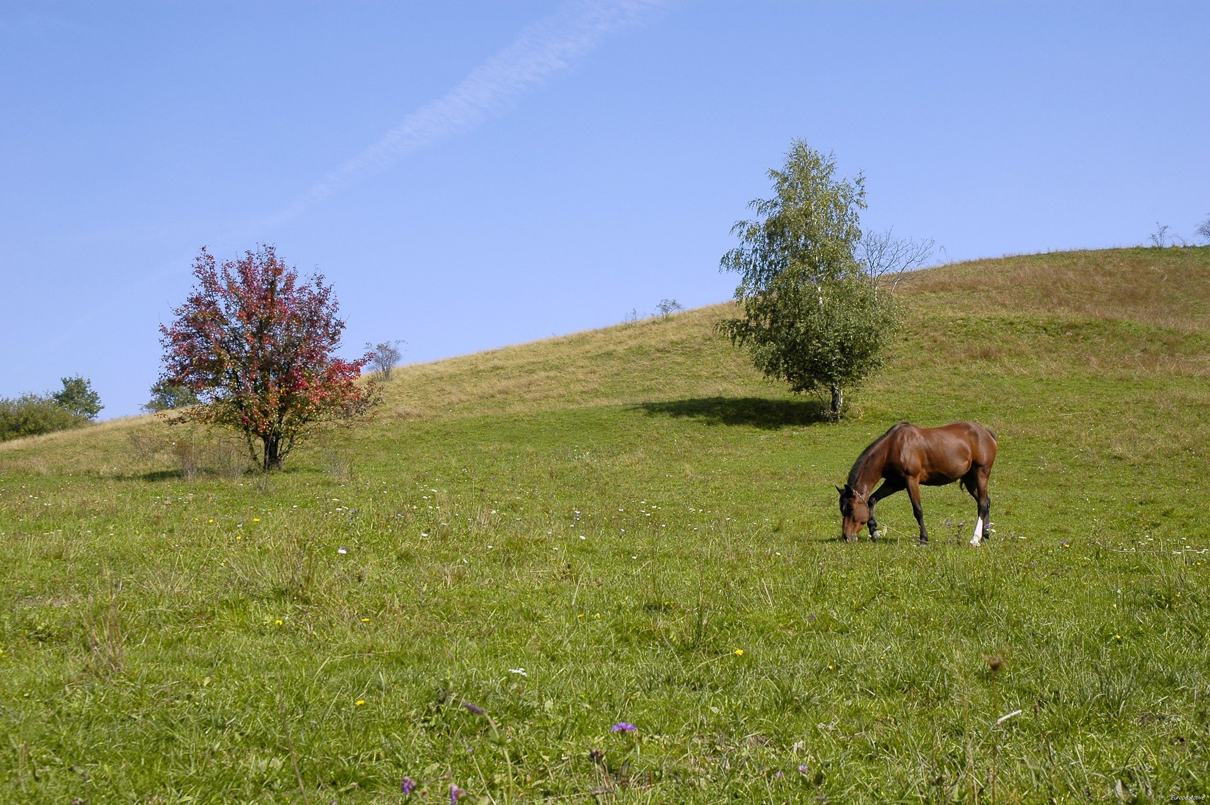 roumanie sejour chevaos randonnée